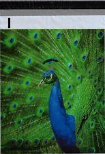 1000 10x13 Blue Peacock Designer Poly Mailers Envelopes Boutique Custom Bags
