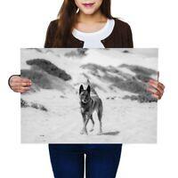 A2 - Belgian Shepherd Malinois Dog Poster 59.4X42cm280gsm(bw) #38905