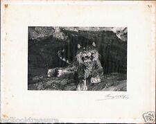 Henry Wolf 1890 Signed Wood Engraving Proof - Tiger after Adolf Menzel