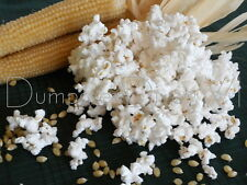 """Japanese White Hulless"" Heirloom Popcorn 35+ seeds Best Tasting Organic NON-GMO"