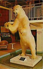 1960s Polar Bear Taxidermy, Holiday Inn, Moline, Illinois Postcard