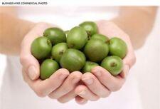 rare fruit ACTINIDIA ARGUTA hardy kiwi very sweet -- 10 seeds