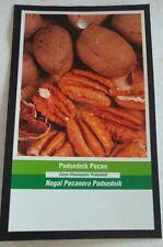 PODSEDNIK PECAN TREE Shade Trees Healthy Plant Large Pecans Nuts Wood Garden