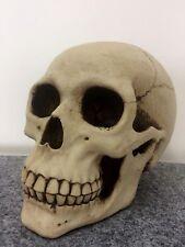Deko Totenkopf Skull wie echt 18 cm Luxus Party gruselig Geschenk Gruft Loft WOW
