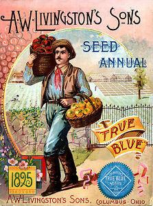 Botanical Poster A W Livingston Fruit poster print Kitchen wall hangings 1825