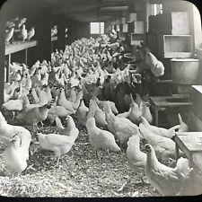 Vtg Magic Lantern Glass Slide Photo Keystone Egg Farm Chick Coop Bound Brook NJ