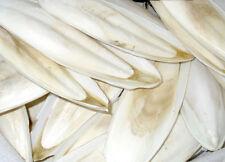 Best Original Cuttlebone Cuttlefish Sepia Bone Bird Food Pickstone 100G New.