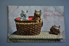 R&L Postcard: Basket of cats Kittens, Waiting for Mistress 1909