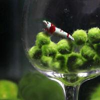 Grüner Moos-Ball-Affe -Aquarienpflanze Aquarium betta Meerestriops V4T7