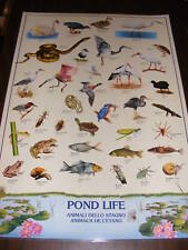 LAMINATED POSTER OF POND LIFE
