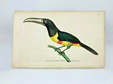 Red-banded Toucan - 1783 RARE SHAW & NODDER Hand Colored Copper Engraving