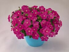 """Trailing Petunia Seeds Success Pink 25 Pelleted Seeds """"NEW"""" true color"""