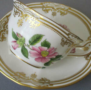 Fine SPODE English Porcelain Cup & Saucer STAFFORD FLOWERS Raised GILT Accents