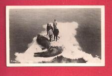 Alaska Walrus Hunting Animals Harvested Skins Iceberg Real Photo Postcard Rppc