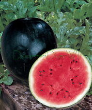 Black Diamond Sweet WATERMELON Heirloom 35-50lb  FRUIT 25 Seeds Organic NON-GMO