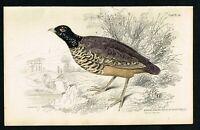 1840 Black-necked Quail, Nigricollis, Hand-Colored Antique Ornithology Print