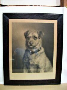 1898 Joseph B. Pratt Engraving after Frank Paton Painting of Irish Terrier PADDY