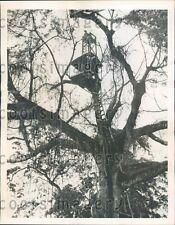 1942 WWII US Troop Treetop Lookout in Surinam Press Photo