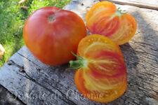 10 graines de tomate rare Hawaiian Pineapple heirloom tomato seeds bio