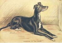 Greyhound - MATTED Dog Print - Lucy Dawson NEW