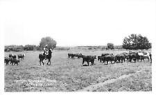 RPPC KEMPER CAMPBELL RANCH Victorville, CA Cowboy, Cattle Vintage Photo Postcard