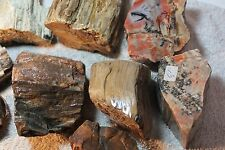 14+ Pounds of COLORFUL Petrified Wood from Oregon - Great look - Great Form! 308