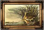 Audubon LONG-BILLED CURLEW Wood Framed Canvas Print Repro 12x20