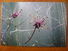 POSTCARD...FALLING FLOWERS CAUGHT IN SPIDER WEB...ARTISTIC / NATURE PHOTOGRAPHY