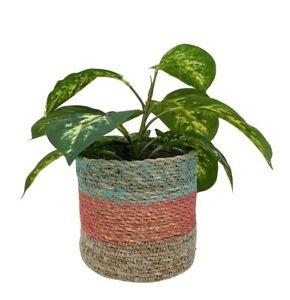 Rustic Basket Planter Blue Woven Lined Plant Pot Herb Flower Storage Boho Holder