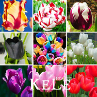 100 PCS Seeds Tulip Bonsai Gesneriana Potted Plants Flowers Free Shipping 2019 N