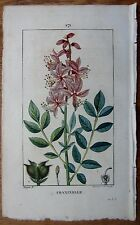Chaumeton / Turpin: Flore Medicale Fraxinella Dittany - 1817
