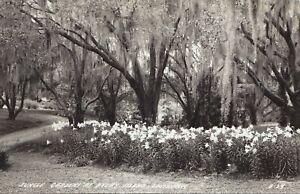Jungle Gardens AVERY ISLAND Louisiana 1925-42 L.L. Cook Real Photo Postcard B-24