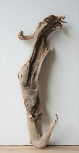 Treibholz Schwemmholz  Driftwood 1 Wurzel Terrarium Dekoration 48 cm