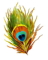 "Waterslide Decals (4pcs 2.5""x3.5"") FLONZ 412-0104 Feather Bird Vintage Painting"