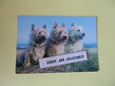 Cairn Terriers, Salmon cameracolour Postcard 6-16-63-95 posted 1986