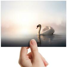 "Swimming Swan Lake Bird - Small Photograph 6"" x 4"" Art Print Photo Gift #8325"