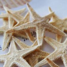 20pcs DIY Natural Starfish Decorations Crafts Decor for Micro Landscape 2-3cm