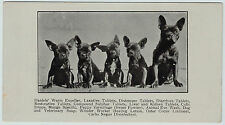 RARE Advertising Trade Card- 1890 A C Daniels Veterinary Medicine French Bulldog