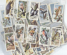 Birds Collectable Tea Cards In Plastic Sleeves