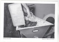 """*Postcard-""""Early Crusher"""" ...of Grapes-  *Temecula Wine Country(A95-2)"""