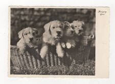 Dogs Germany Vintage RP Postcard 440a