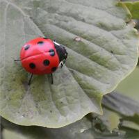 Ladybug Insect Animal Ornament Garden Miniature Flower Pot Planter Decor Toy