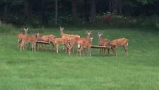 "Hurley Byrd 48"" Free Standing Deer Feeder - Cherry - Qty of 2 Packaged in 1 Box"