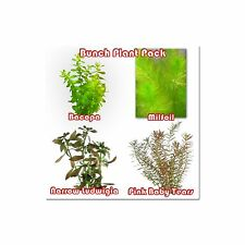 Live Aquarium Aquatic Fish Tank - Bunch Plant Pack