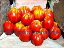 Ochsenherz - Coeur de Boeuf - 15 Samen - gerippte Tomate