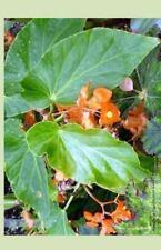 Angel Wing Begonia 2014 Weekly Calendar : Week by Week Calendar with Photo of...