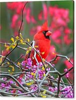Limited Edition Canvas Print Spring Colors Cardinal Bird Art Mike Quesinberry