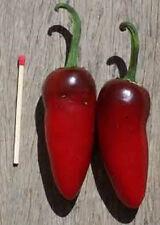 """Chilli Jalapeno """"Capsicum Annuum""""   50  Fresh Seeds"""