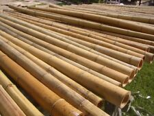 Bambusstange Bambus Bambusrohre Bambushalm Bambusstangen 50 Stk 3 m Ø 2-3 cm