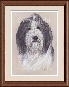 BEARDED COLLIE head portrait fine art print by Lynn Paterson